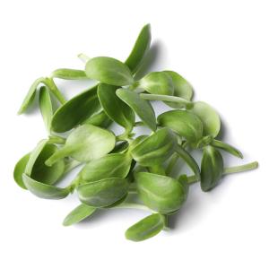 Salad Mix Microgreens